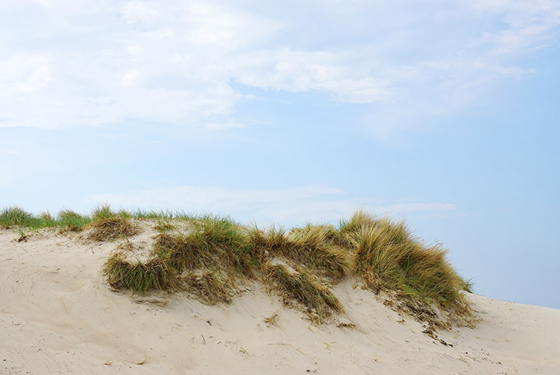 Trawa na piasku