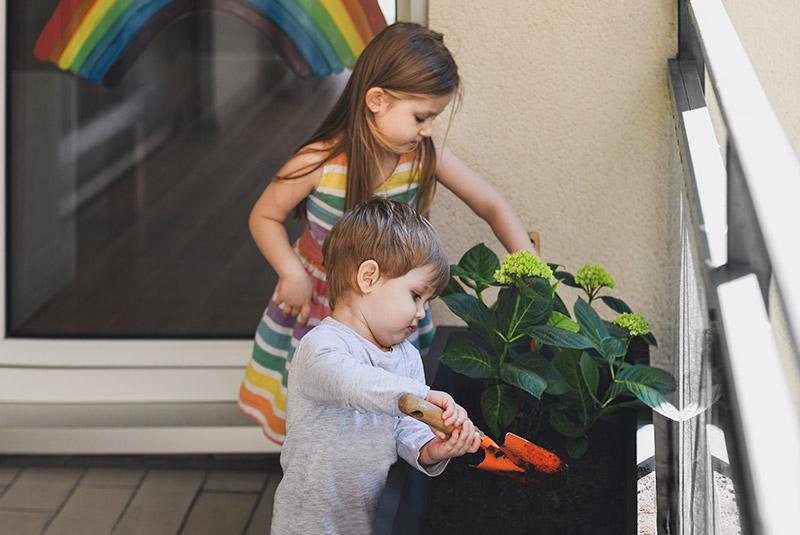 Rozmnażanie hortensji ogrodowej